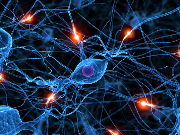 Los circuitos cerebrales son plásticos