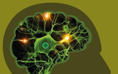 Los 12 principios del Aprendizaje del Cerebro